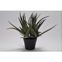 GREEN AGAVE PLANT POTTED